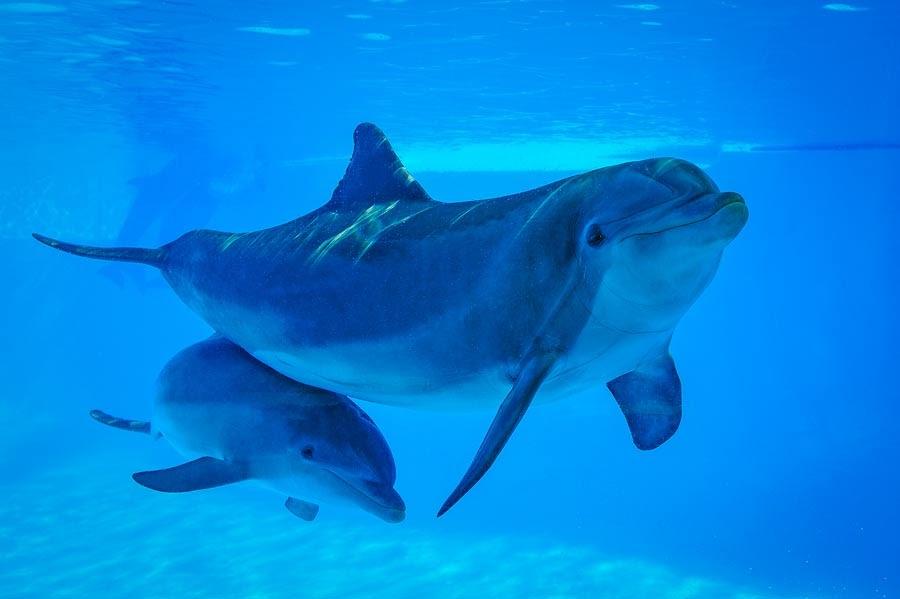 Delfines en Zoomarine