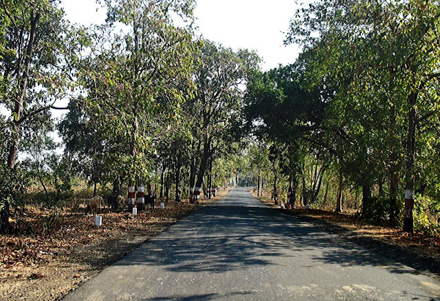 country road amidst trees