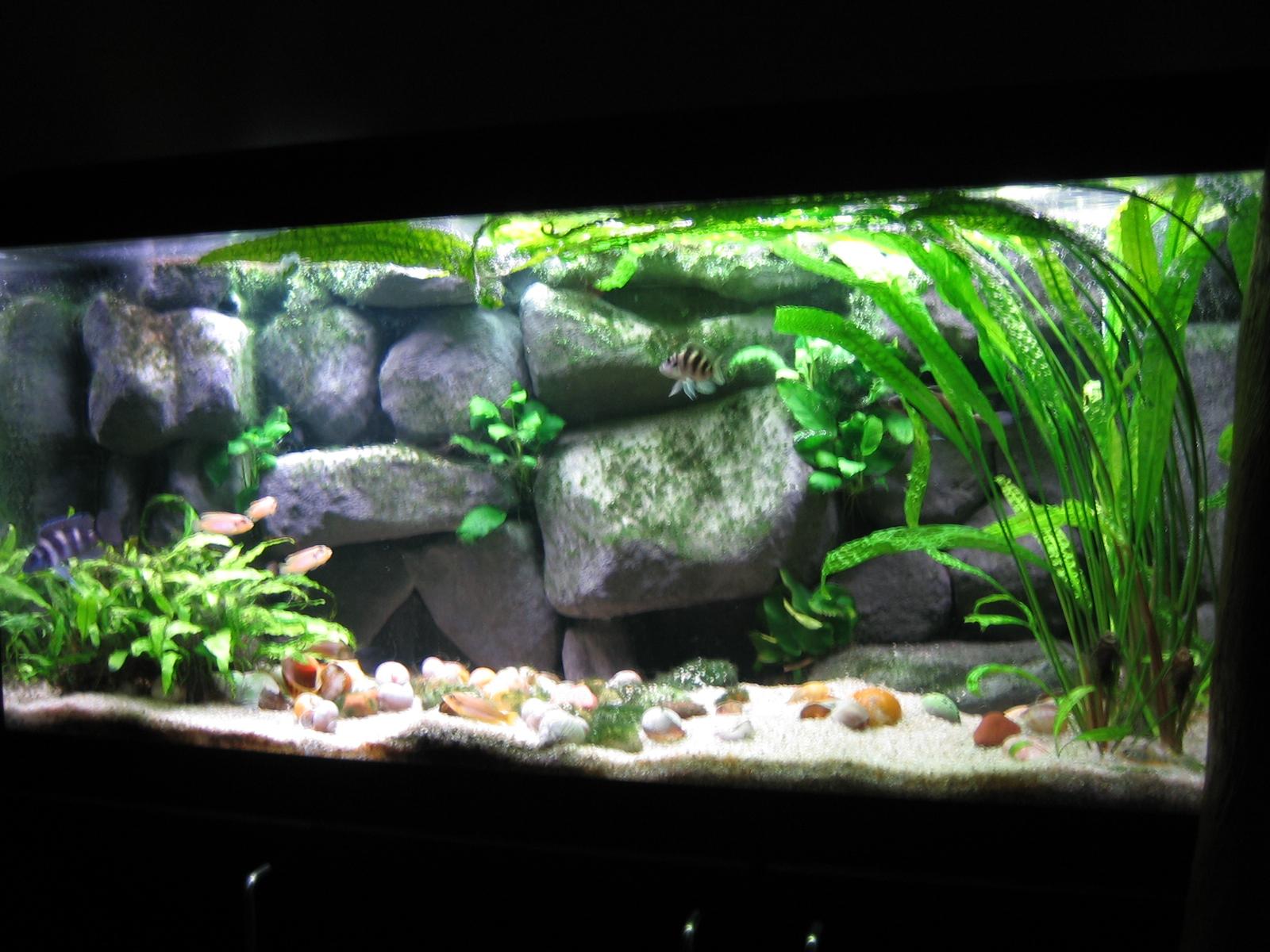 Akvaarion Sisustus