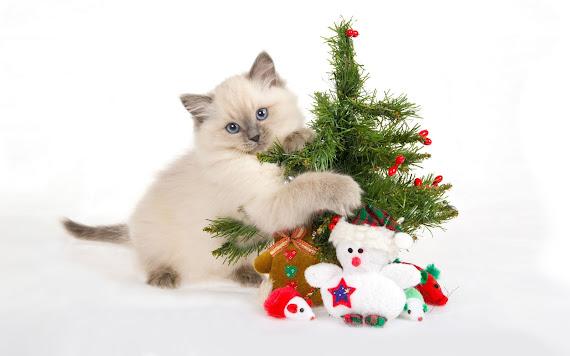 download besplatne Božićne pozadine za desktop 2560x1600 čestitke blagdani Merry Christmas životinje mačka