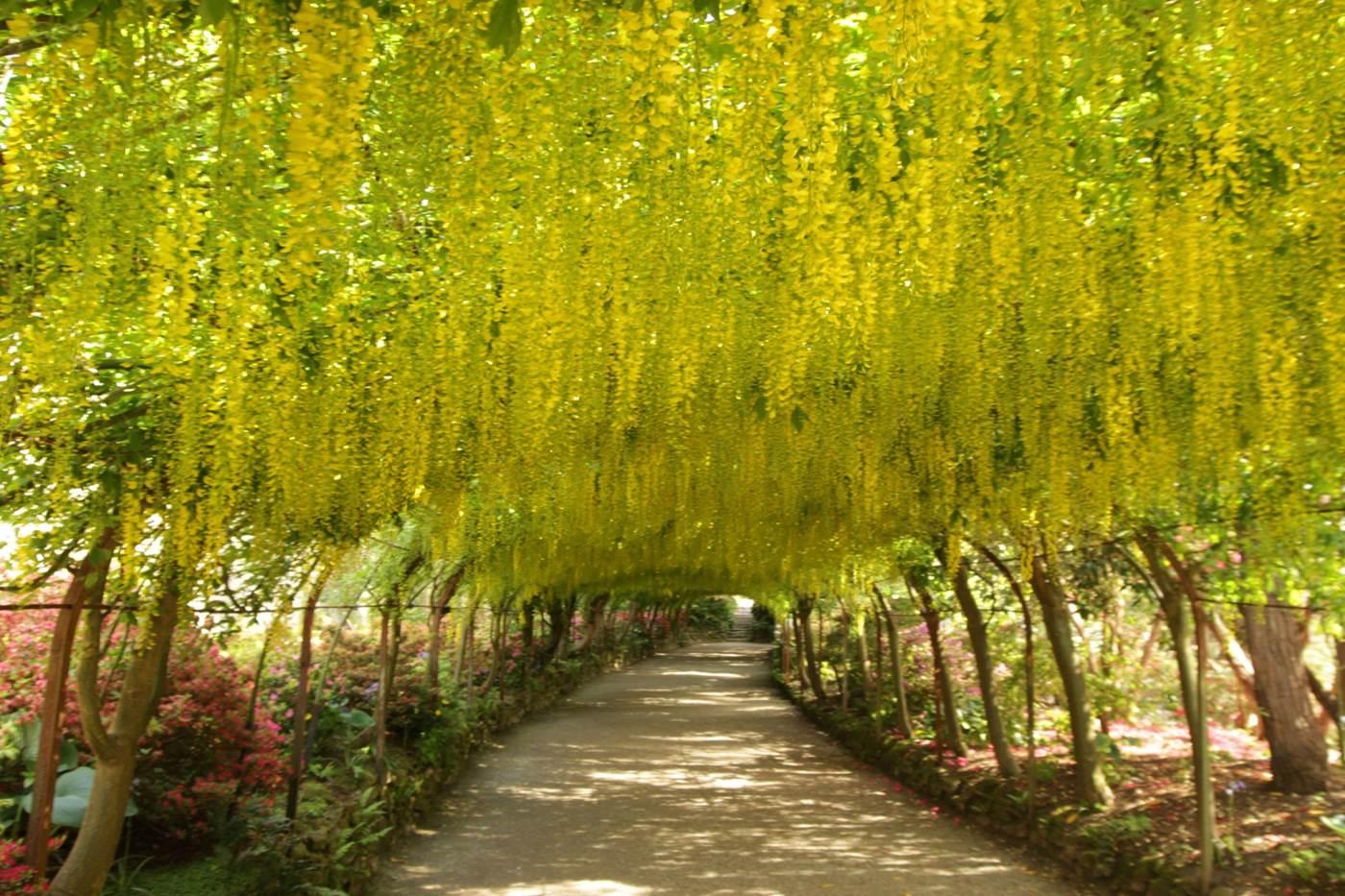national trust scones bodnant garden