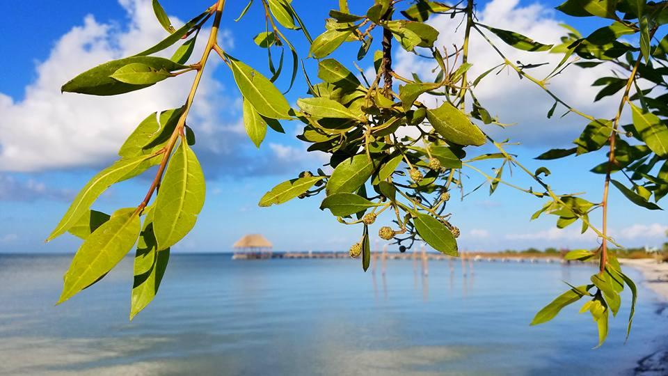 "<img src  Isla Holbox.jpg"" lt="" http://dailytravelexperience.blogspot.rs/"" />"