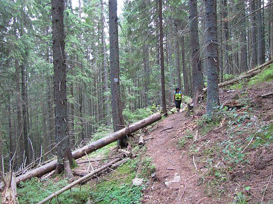 Na leśnej ścieżce.