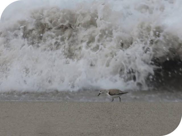 From Venice Beach to Santa Monica: Seabird and wave