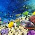 Peligra el Triángulo de Coral, el lugar más biodiverso del planeta