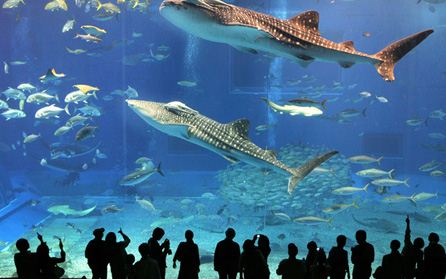 Entertainment Tour: Aquarium Bayrampasa