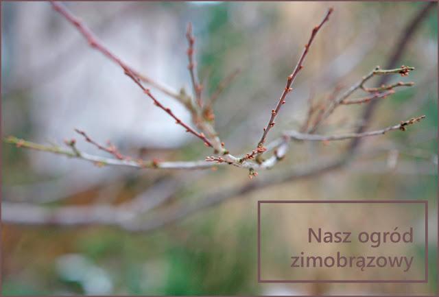 gałązki zimą