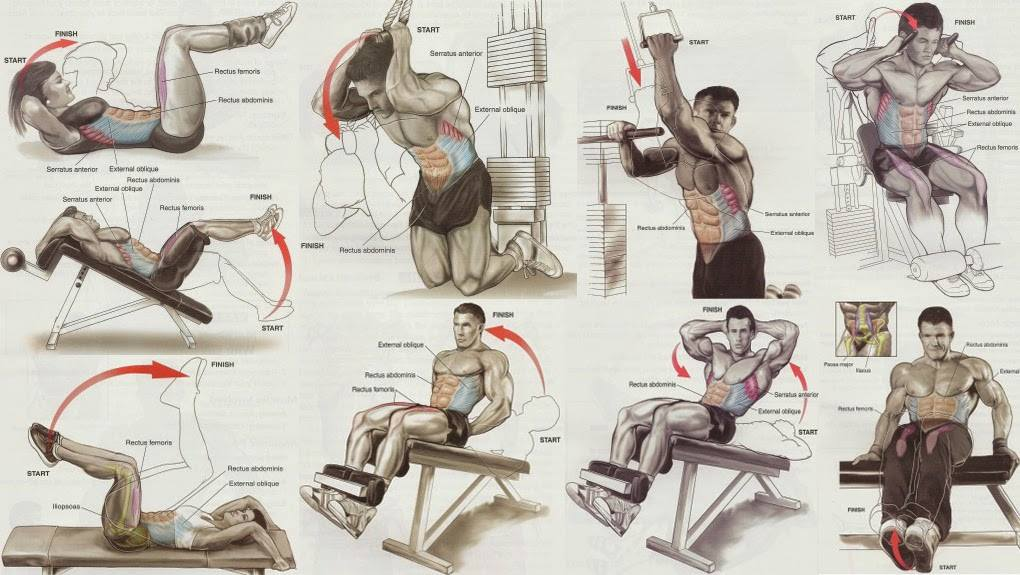 Bodybuilding Exercises Chart With Pictures   EOUA Blog