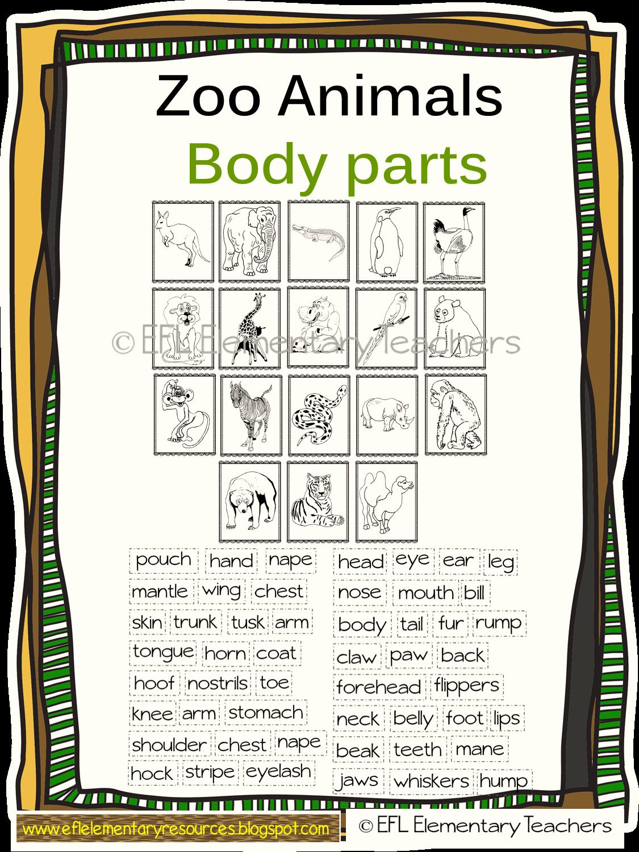Efl Elementary Teachers Zoo Animals Have A Body