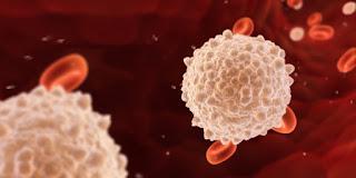 10 Cara Meningkatkan Kandungan Sel Darah Putih Dalam Tubuh