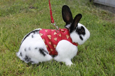 https://www.etsy.com/listing/122616661/loveheart-pet-rabbit-harness-unisex-made?ref=br_feed_40&br_feed_tlp=valentines-day