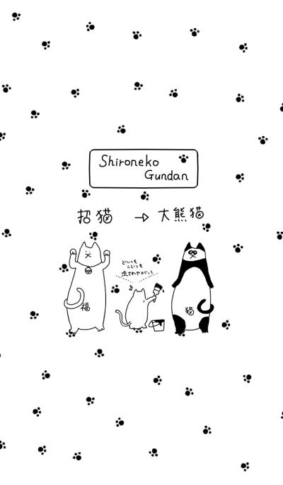 Shironeko Gundan Change to panda