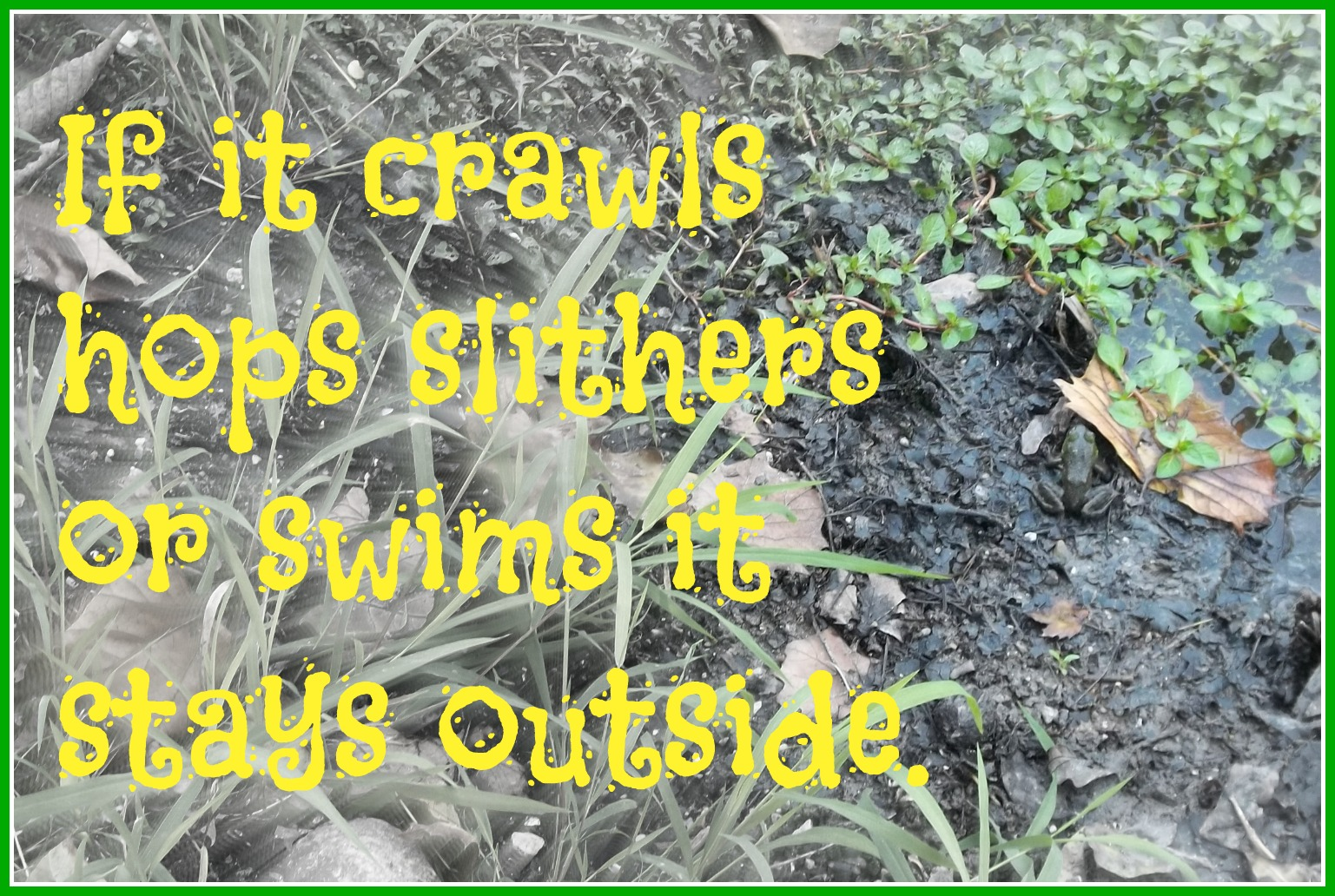I need a sign with some of these creative country sayings on my back door & Creative Country Sayings: If It Crawls Quote - Kids Creative Chaos