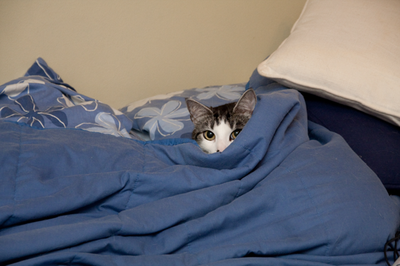 Kissan tunne-elämä, pelko