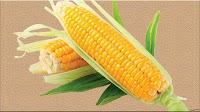 gambar buah jagung, bahasa arab jagung