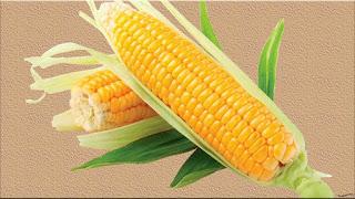 gambar buah jagung