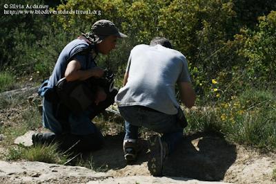 http://www.biodiversidadvirtual.org/insectarium/Participantes-Testing-Punto-BV-Espacio-Pirineos-Graus-9-5-2015-img691427.html