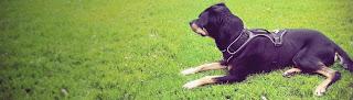 Arnes para perros