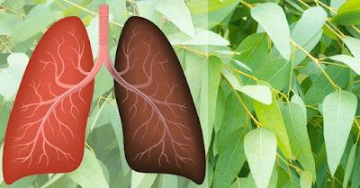 15 Plantes et herbes qui peuvent améliorer la santé pulmonaire et guérir les infections respiratoires