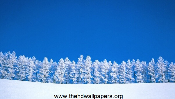 Desktop HD Wallpaper Winter Blue White Trees