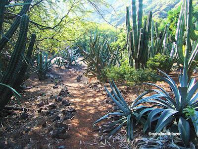 botanical Hawaii gardens cactus