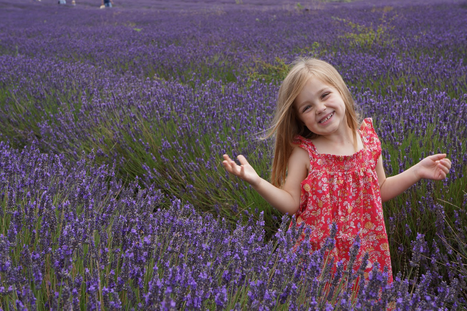 smiling little girl on a lavender field