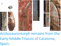 http://sciencythoughts.blogspot.com/2018/03/archosauromorph-remains-from-early.html