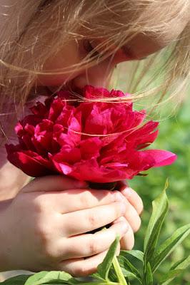 prezent na Dzień Matki, piwonie