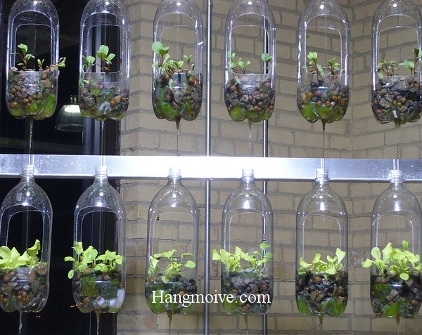 Bằng cách sự dụng các vỏ chai nhựa đã dùng, chúng ta có thể cắt, khoét lỗ rồi treo lên giá giúp chúng ta có thể trồng rau ở nhưng nơi có không gian chật hẹp.