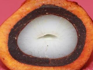 kelapa-sawit-dura.jpg