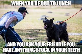 #sammythedogtrainer