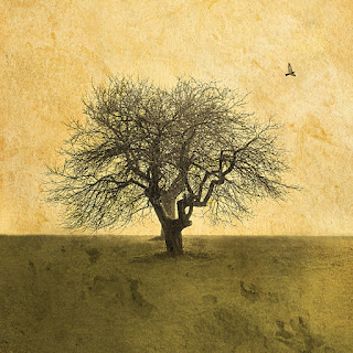 Together from the Roots+Wings Series by Sara Harley