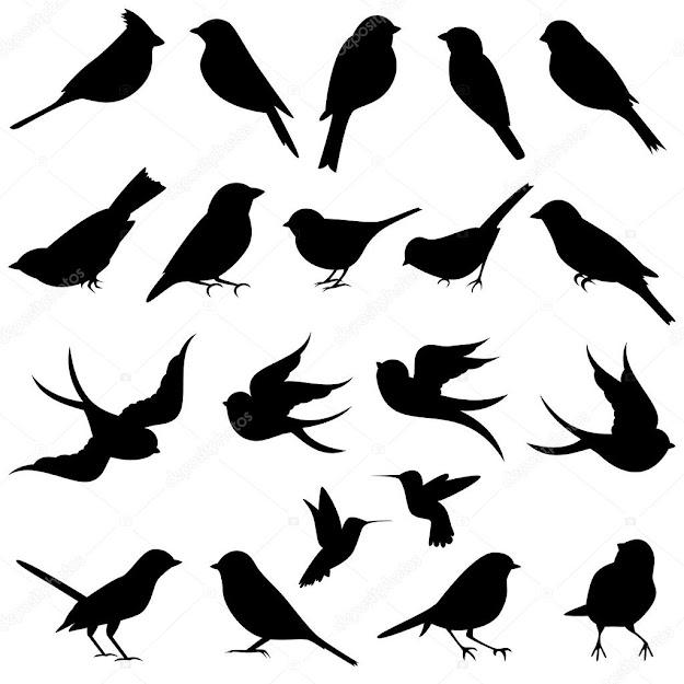 Vector Collection Of Bird Silhouettes  Stock Vector
