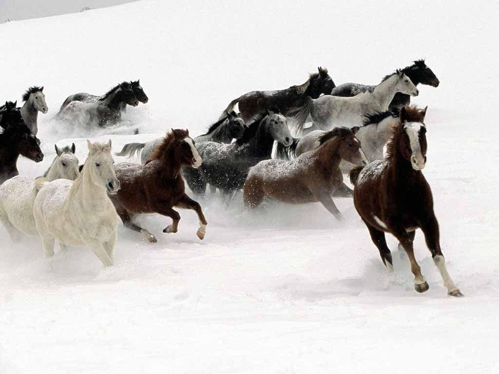 Most Inspiring   Wallpaper Horse Chromebook - Horses%2Bruns%2Bin%2Bthe%2BSnow  2018_92773.jpg
