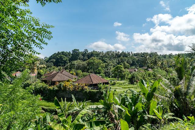 Rizières de Tirtagangga - Bali