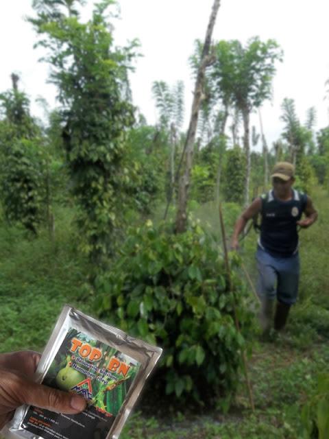 Mosa Top BN Pestisida Organik Pertanian Untuk Tanaman Lada