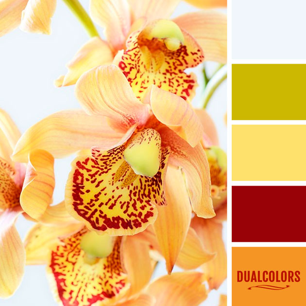 color_paleta_54