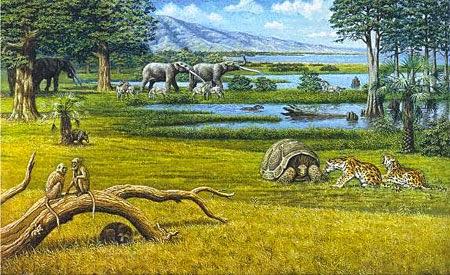 Período Terciário (65 milhões de anos)
