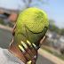 HAIR TINT/DYE IDEAS FOR BLACK WOMEN (PHOTOS)