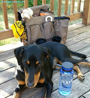 doberman puppy mix rescue dog