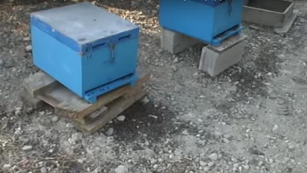 Θάνατος μελισσών από ραντίσματα: Μια καταστροφή που δεν αποζημιώνεται VIDEO