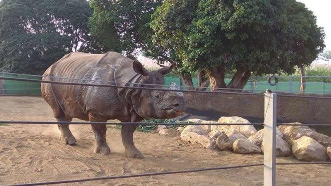 Bertus Badak terbesar Dunia berada di Batu Secret Zoo
