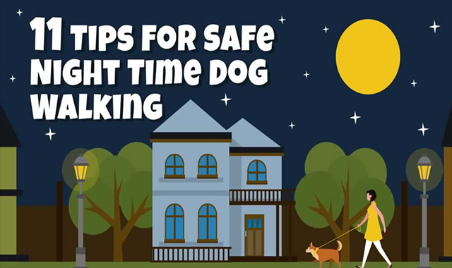 Tips For Safe Night Time Dog Walking
