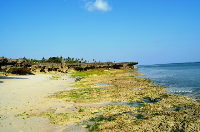 Dinding karang yang kokoh di sepanjang pantai Lemo-Lemo