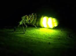 Resultado de imagen para el brillo de las luciernagas