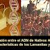 ¿Hay evidencia que conecte ADN de Nativos Americanos con Lamanitas según se describen en El Libro de Momón?