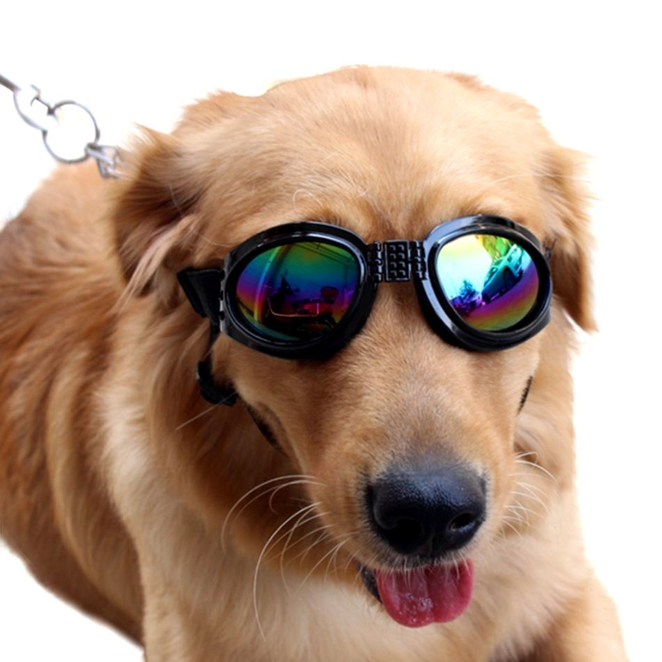 Cool Dog With Black Glasses | Its Wallpapers