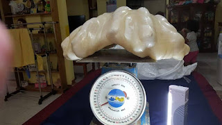 worlds biggest pearl, worlds largest pearl, pearl