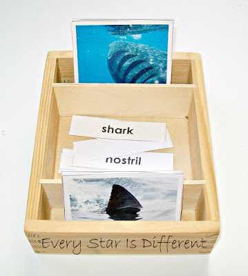 Shark themed nomenclature cards