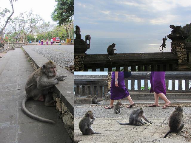 monyet nakal di uluwatu